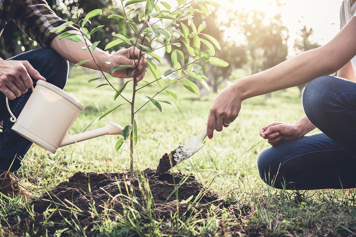 植树节|种下希望,收获美好