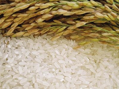 当阳大发米业