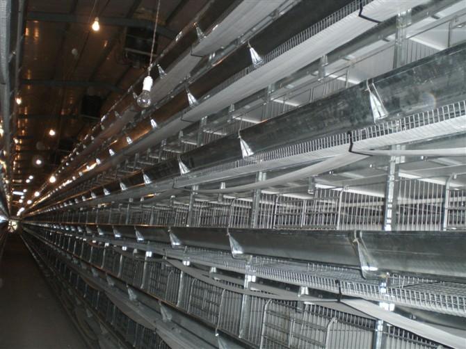 自动养殖设备价格