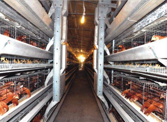 自动养殖设备通风问题