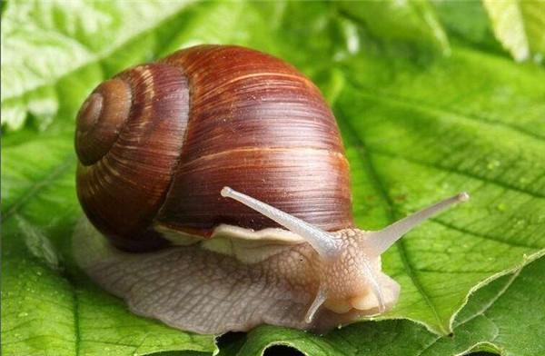 白玉蜗牛养殖厂
