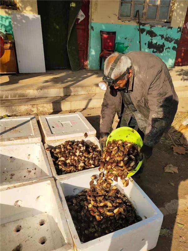 河南白玉蜗牛养殖基地