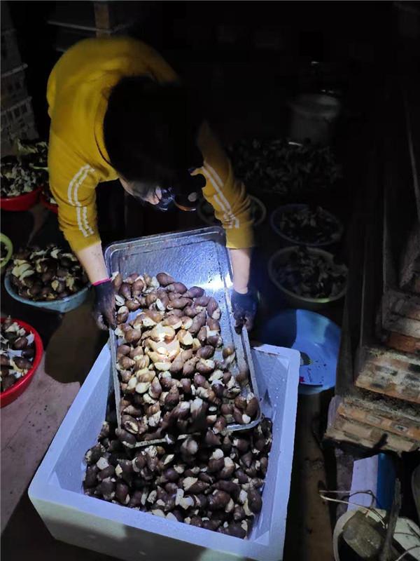 河南白玉蜗牛养殖厂