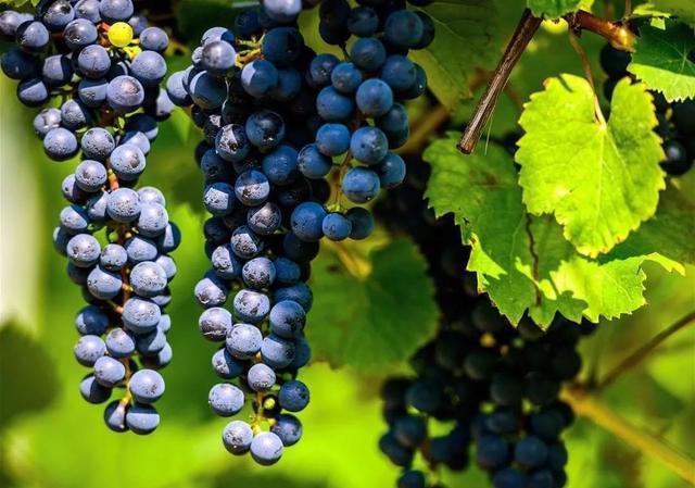 宁夏召开葡萄酒产业高质量发展第三次推进会!提出这些要求…