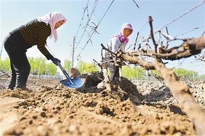 华昊酒庄科技创新为宁夏葡萄酒产业赋能