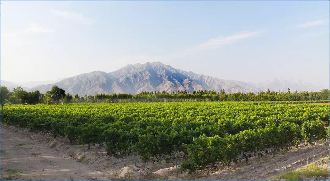 标准化、规模化、品牌化!今年的葡萄酒产业就应该这样干!华昊酒庄