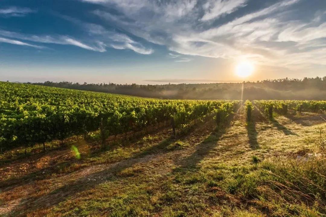 贺兰山东麓葡萄酒青铜峡产区锁定TopWine,辐射全国市场!明天不见不散!