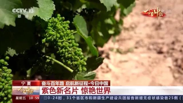 今日中国·宁夏丨什么是紫色名片?从一杯宁夏葡萄酒的奇妙之旅开始→