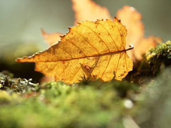 秋季户外活动需要注意什么问题?