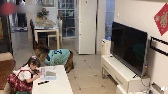 狗子听到家长进门提醒女孩写作业,网友:我爸妈一般摸电视烫不烫