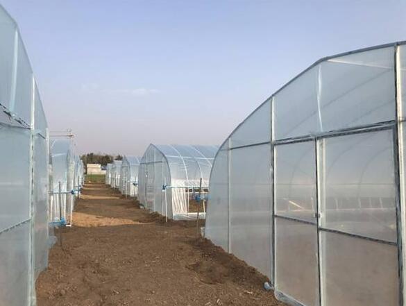 温室大棚建设时容易出现的几个误区?