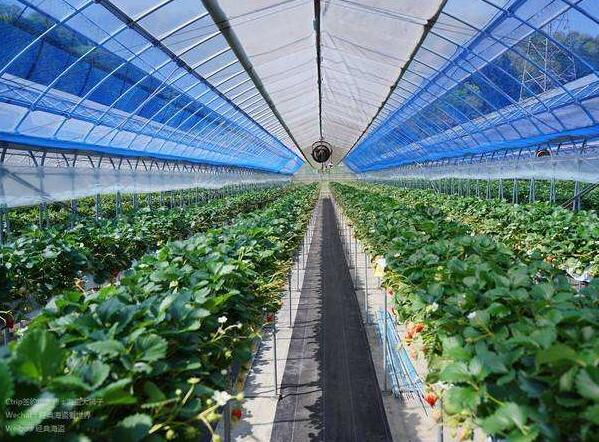 陕西新式温室大棚采暖选用什么设备比较好?