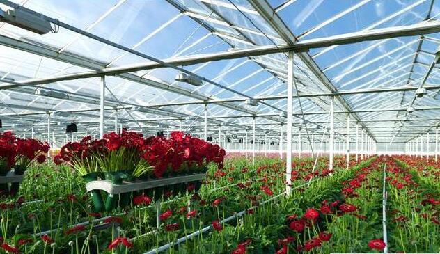 陕西智能温控草莓温室大棚厂家解说草莓大棚