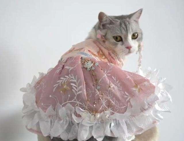 给猫做汉服