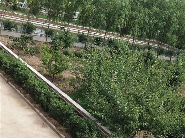 内蒙古自治区老年公寓种植采摘区