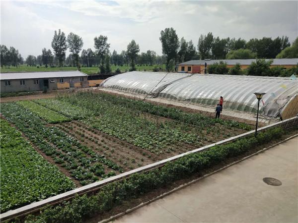 呼市养老院蔬菜种植基地