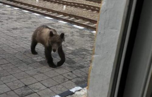 呼伦贝尔哈达火车站惊现黑熊 工作人员描述现场惊险一幕