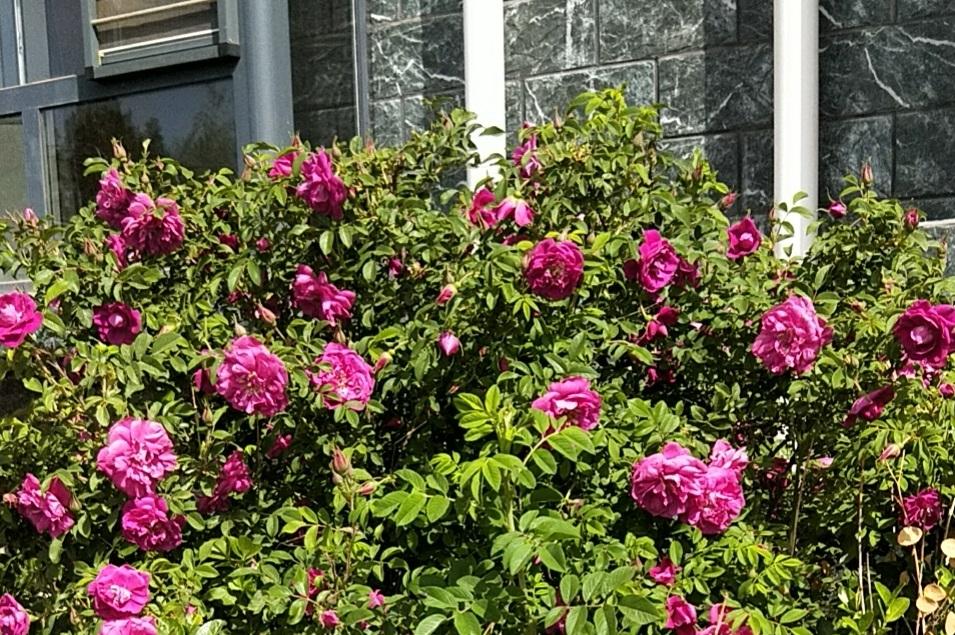呼和浩特市老年公寓鲜花盛开