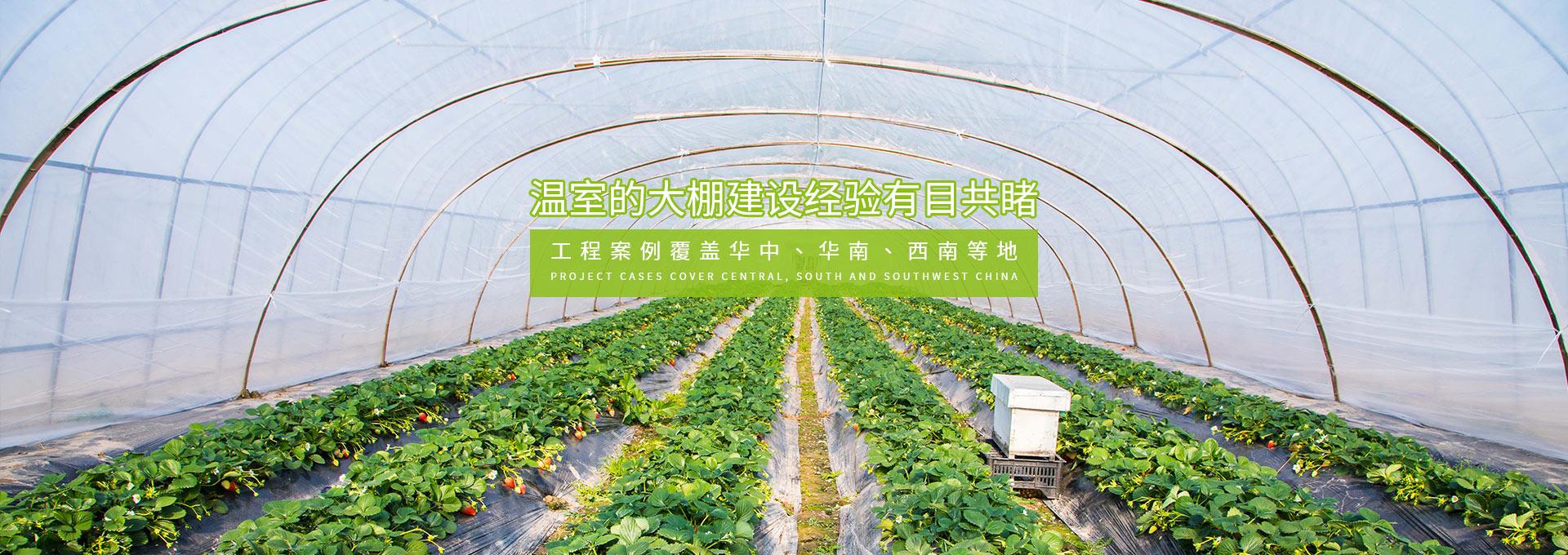 四川蔬菜温室大棚