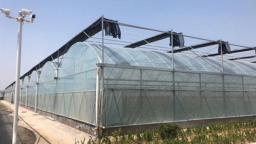 四川蔬菜温室大棚展示