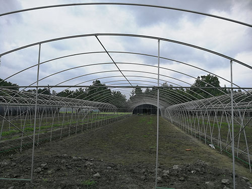 四川蔬菜温室大棚工程