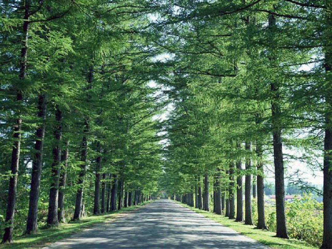 行道树在冬季应该如何养护?