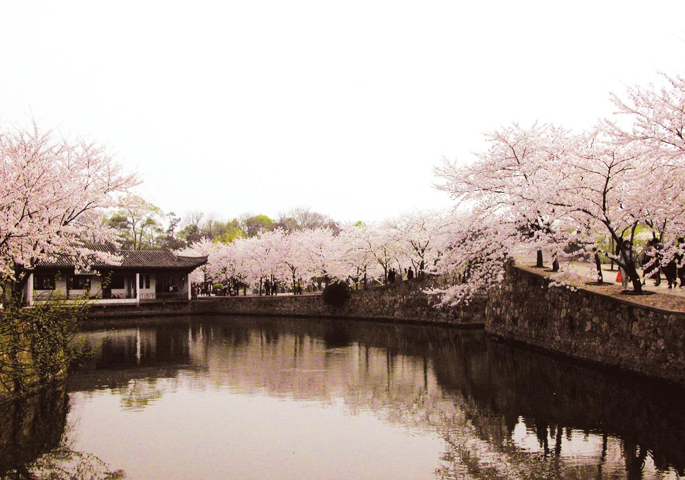 蓝田县聚庆苗圃-樱花公园案例