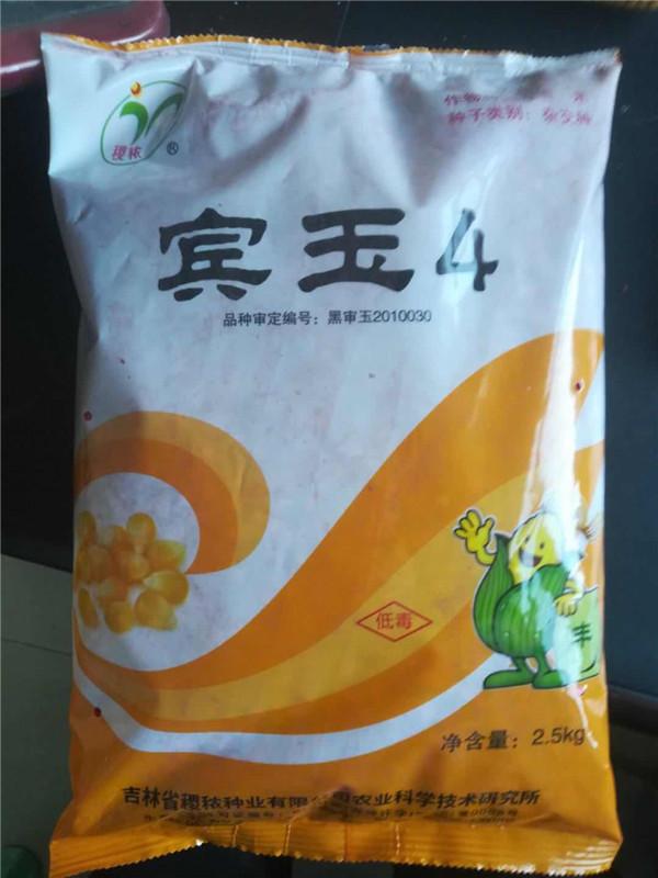 玉米种子 宾玉4号 长期大量供应