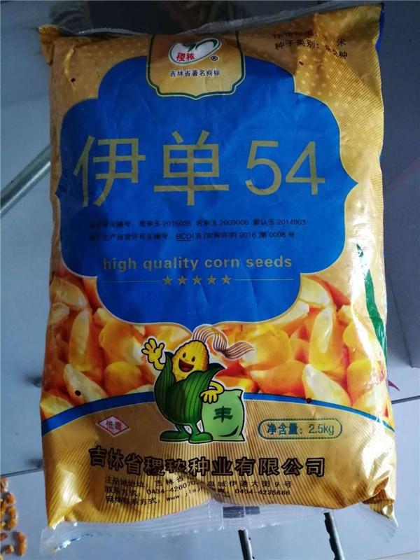 内蒙古玉米 伊单54 玉米种子播种时间