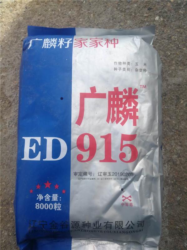 广麟ED915 玉米种子 超甜水果玉米种子批发