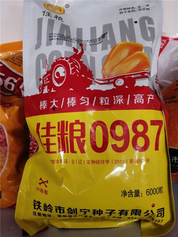甜粘糯玉米种子 佳粮0987 内蒙古玉米种子批发