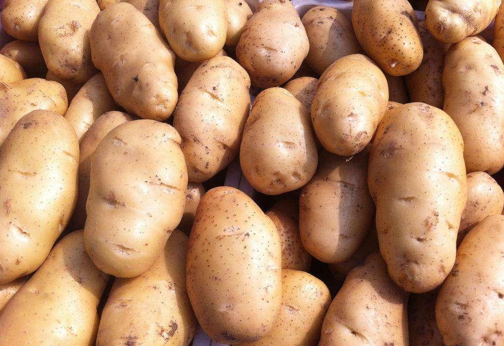 呼市土豆种子