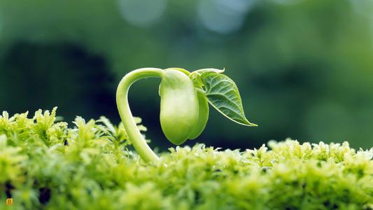 植物靠什么来传播种子?