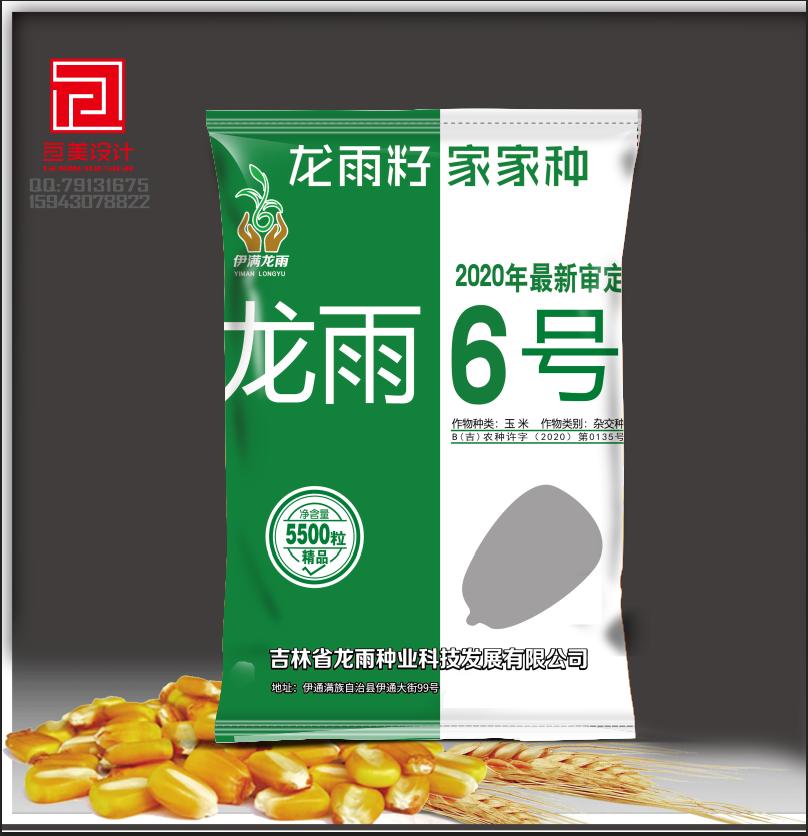 龙雨6号-玉米种子