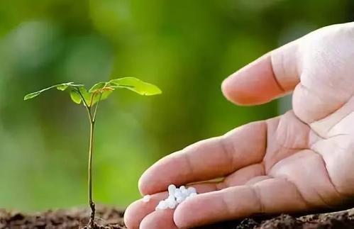 见效快就是真的好肥料吗?
