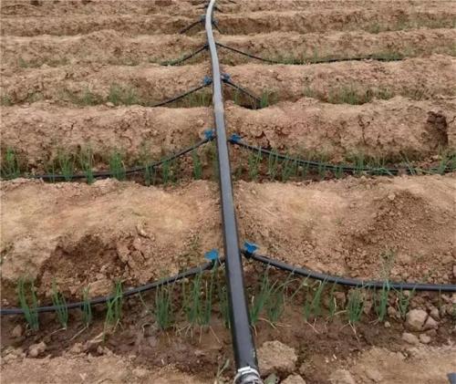 滴灌容易堵,铺设滴灌带我们应该注意什么?