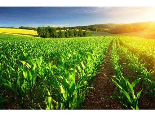 肥料用不对,努力也白废!肥料选用五大原则你知道吗?