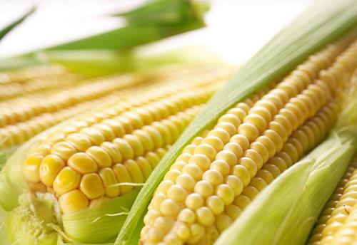 内蒙古玉米种子销售