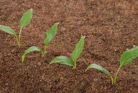 污染土壤修复概述以及修复技术原理介绍
