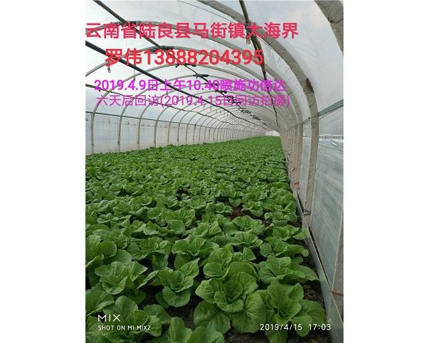 河南脲醛缓释氮肥客户使用案例