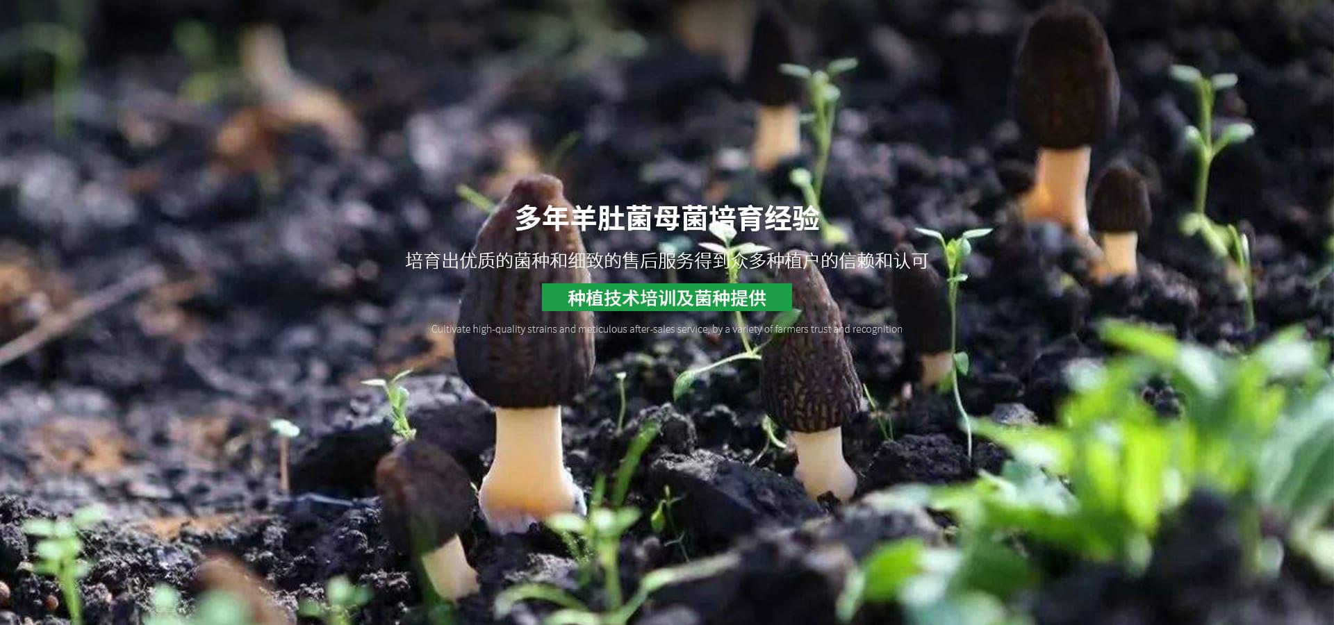 四川食用菌菌种