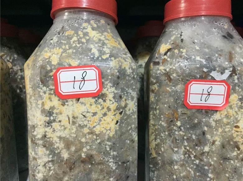 四川食用菌菌种基地