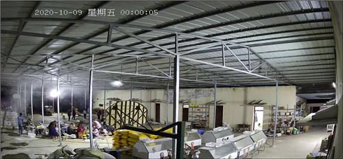四川羊肚菌鲜品生产