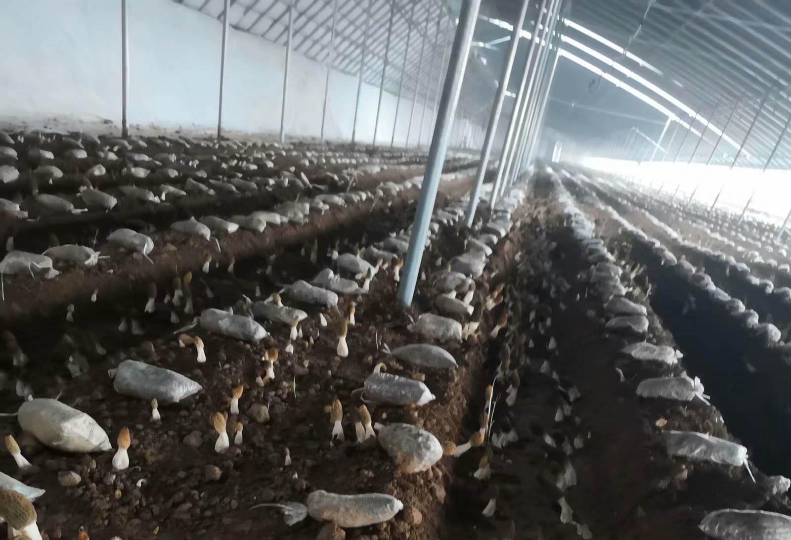 四川食用菌种植