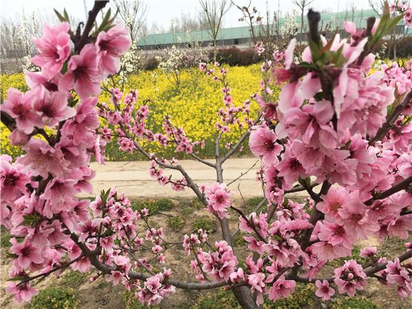 恩光之家花园风景