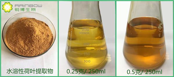 荷叶提取物,水溶性荷叶提取物