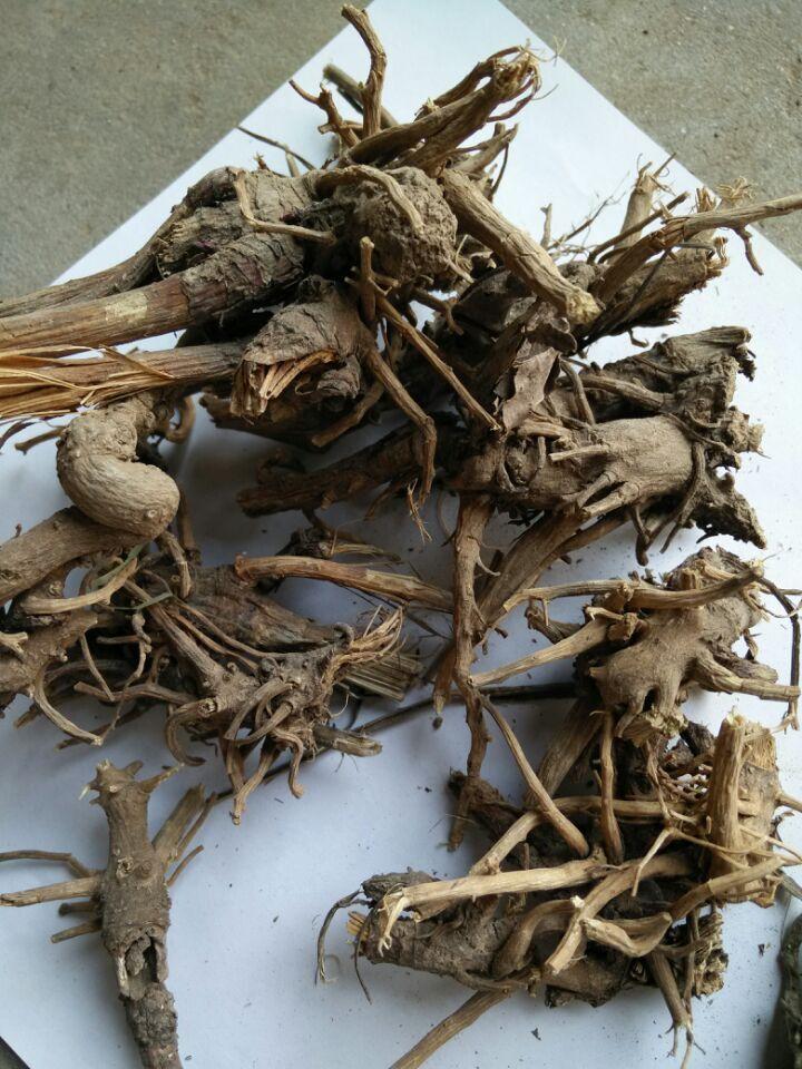 紫锥菊提取物厂家为您介绍紫锥菊根的鉴别