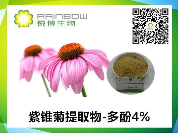 紫锥菊中菊苣酸的提取