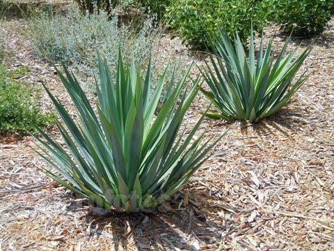 天然植物提取物提取用水系统的消毒与灭菌方法