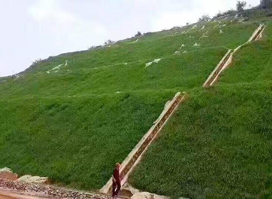 四川边坡绿化案例